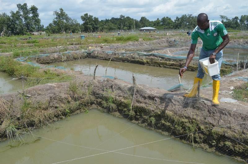 Aquaculture Value Chain Pilot Project Pind Foundation