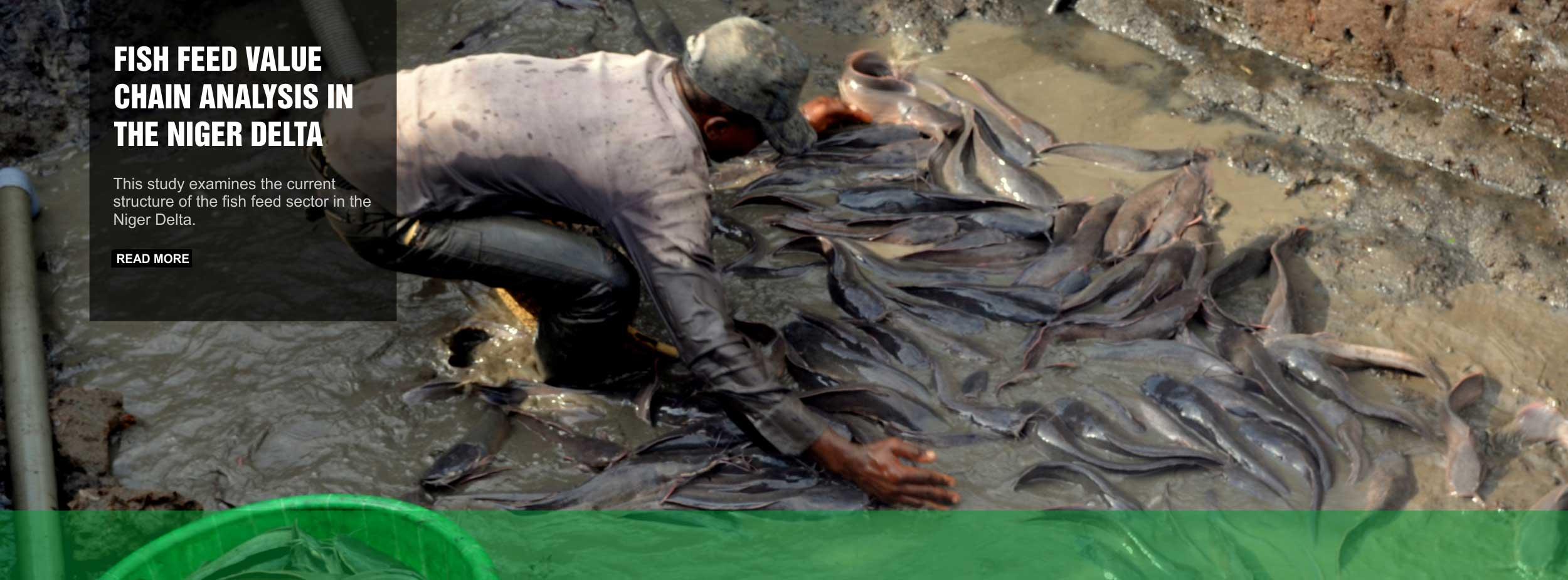 feed-fish-value